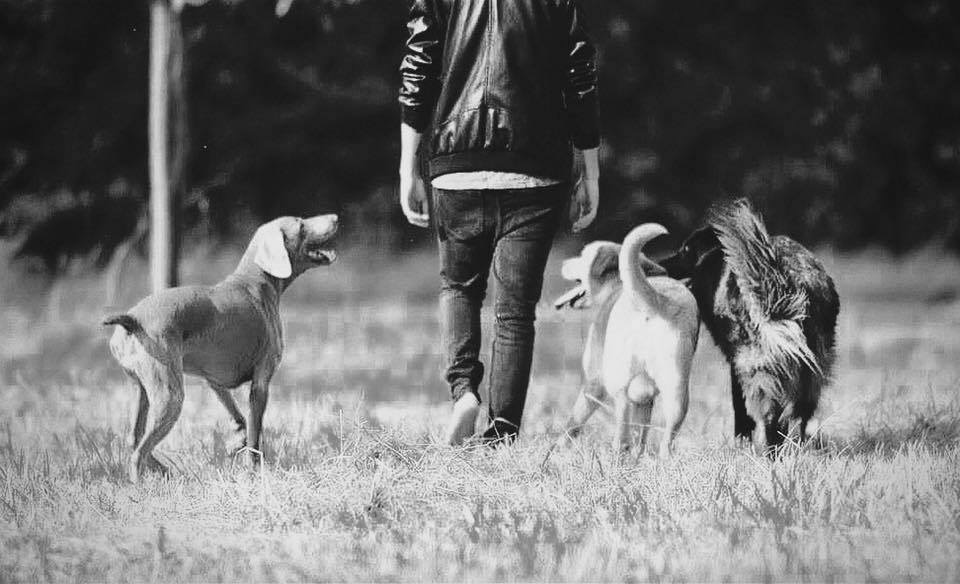Tarifs Éducateur canin